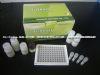 人肌球蛋白重链(MHC)ELISA Kit