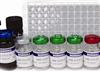 猪C反应蛋白(CRP)ELISA试剂盒